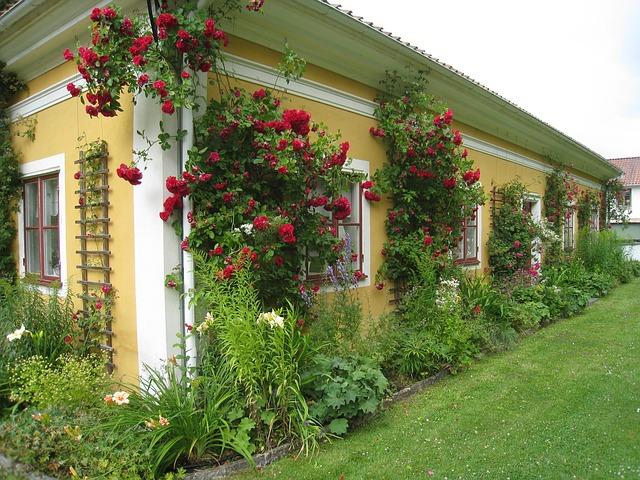 růže na domě