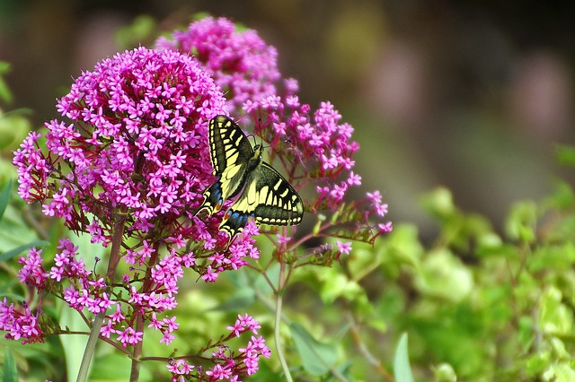 motýl na květu